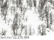 Купить «Деревья на склоне горы зимой», фото № 22215369, снято 28 декабря 2015 г. (c) Илья Бесхлебный / Фотобанк Лори