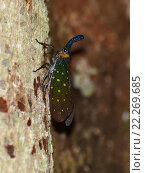 Яркое насекомое цикада. Стоковое фото, фотограф Юлия Бубличенко / Фотобанк Лори