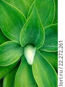 Купить «Растение крупным планом», фото № 22272261, снято 29 августа 2013 г. (c) Морозова Татьяна / Фотобанк Лори
