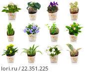 Купить «green houseplant and flower», фото № 22351225, снято 22 октября 2018 г. (c) PantherMedia / Фотобанк Лори