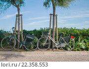 Два велосипеда у зеленого забора. Стоковое фото, фотограф Иманова Ирина / Фотобанк Лори