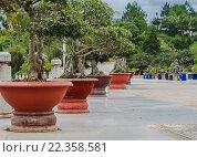 Азиатские экзотические деревья в горшках. Стоковое фото, фотограф Иманова Ирина / Фотобанк Лори