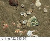 Песок, ракушки. Стоковое фото, фотограф Стряпцев Вячеслав / Фотобанк Лори