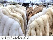 Купить «Демонстрационный зал с шубами при меховой фабрике», фото № 22458513, снято 12 марта 2016 г. (c) Parmenov Pavel / Фотобанк Лори