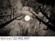 Купить «Готический ночной пейзаж», фото № 22492697, снято 28 сентября 2015 г. (c) Зезелина Марина / Фотобанк Лори