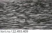 Утка в водоеме. Стоковое видео, видеограф Евгений Пивоваров / Фотобанк Лори