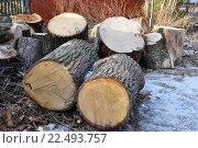 Купить «Распиленное на большие чурки толстое дерево в посёлке Вырица Ленинградской области», фото № 22493757, снято 20 марта 2016 г. (c) Максим Мицун / Фотобанк Лори