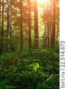 Купить «Лесной пейзаж с папоротниками», фото № 22514873, снято 23 августа 2013 г. (c) Зезелина Марина / Фотобанк Лори