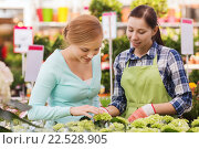 Купить «happy women choosing flowers in greenhouse», фото № 22528905, снято 25 февраля 2015 г. (c) Syda Productions / Фотобанк Лори