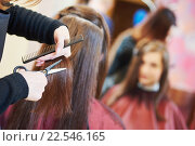 Купить «Hands of professional hair stylist with scissors and comb», фото № 22546165, снято 7 марта 2016 г. (c) Дмитрий Калиновский / Фотобанк Лори