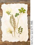 Купить «Лист бумаги с гербарием», фото № 22577785, снято 8 ноября 2015 г. (c) Astroid / Фотобанк Лори