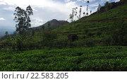Купить «tea plantation field on Sri Lanka», видеоролик № 22583205, снято 18 февраля 2016 г. (c) Syda Productions / Фотобанк Лори