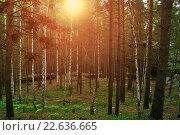 Купить «Летний лес, солнце сквозь деревья», фото № 22636665, снято 18 августа 2009 г. (c) Зезелина Марина / Фотобанк Лори