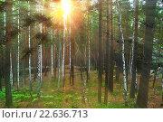 Купить «Летний лес, солнце сквозь деревья», фото № 22636713, снято 18 августа 2009 г. (c) Зезелина Марина / Фотобанк Лори