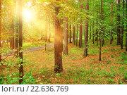 Купить «Летнее утро в лесу», фото № 22636769, снято 10 августа 2009 г. (c) Зезелина Марина / Фотобанк Лори