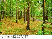 Купить «Густой лиственный лес - летний пейзаж», фото № 22637197, снято 10 августа 2009 г. (c) Зезелина Марина / Фотобанк Лори