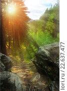 Купить «Летний пейзаж - восход солнца в горном лесу», фото № 22637477, снято 18 августа 2009 г. (c) Зезелина Марина / Фотобанк Лори