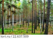 Купить «Лесной пейзаж с древними каменными глыбами между деревьями», фото № 22637509, снято 18 августа 2009 г. (c) Зезелина Марина / Фотобанк Лори
