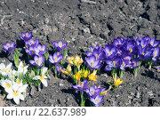 Весенние цветы. Стоковое фото, фотограф Дарья Арифуллина / Фотобанк Лори