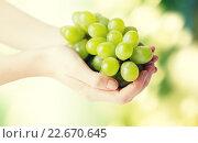 Купить «close up of woman hands holding green grape bunch», фото № 22670645, снято 28 апреля 2015 г. (c) Syda Productions / Фотобанк Лори