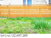 Купить «Молодая трава на фоне забора», фото № 22697289, снято 26 апреля 2016 г. (c) Айнур Шауэрман / Фотобанк Лори
