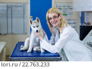 A woman vet petting a dog. Стоковое фото, агентство Wavebreak Media / Фотобанк Лори