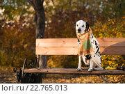 Осень в городе. Собака в шарфике сидит на лавке в парке. Стоковое фото, фотограф Ольга Козина / Фотобанк Лори