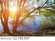 Купить «Солнечный красочный весенний пейзаж - Ива под солнцем на берегу небольшой реки», фото № 22785897, снято 5 мая 2016 г. (c) Зезелина Марина / Фотобанк Лори