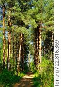 Купить «Яркий весенний лес», фото № 22816369, снято 5 мая 2016 г. (c) Зезелина Марина / Фотобанк Лори