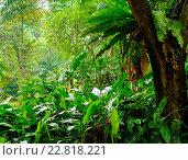 Купить «Lush tropical green jungle», фото № 22818221, снято 16 ноября 2015 г. (c) Andrejs Pidjass / Фотобанк Лори
