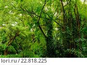 Купить «Lush tropical green jungle», фото № 22818225, снято 16 ноября 2015 г. (c) Andrejs Pidjass / Фотобанк Лори