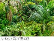 Купить «Lush tropical green jungle», фото № 22818229, снято 16 ноября 2015 г. (c) Andrejs Pidjass / Фотобанк Лори