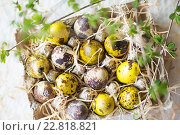 Купить «Перепелиные яйца. Весенний натюрморт», фото № 22818821, снято 30 апреля 2016 г. (c) Екатерина Тарасенкова / Фотобанк Лори
