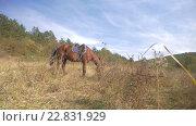 Купить «Лошадь в горах», видеоролик № 22831929, снято 5 мая 2016 г. (c) Сергей Богатырев / Фотобанк Лори