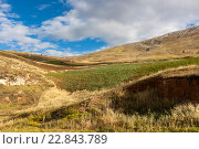 Купить «Картофельное поле в горной долине, Перу», фото № 22843789, снято 23 апреля 2016 г. (c) Михаил Кочиев / Фотобанк Лори