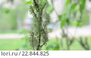Купить «Молодые листья и серёжки ивы весной», видеоролик № 22844825, снято 11 мая 2016 г. (c) Володина Ольга / Фотобанк Лори