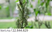 Купить «Молодые листья и серёжки ивы весной», видеоролик № 22844829, снято 11 мая 2016 г. (c) Володина Ольга / Фотобанк Лори