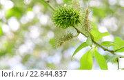 Купить «Молодые листья и серёжки ивы весной», видеоролик № 22844837, снято 11 мая 2016 г. (c) Володина Ольга / Фотобанк Лори