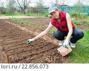 Купить «Девушка сажает лук в огороде. Дачная работа.», фото № 22856073, снято 8 мая 2016 г. (c) Андрей Кириллов / Фотобанк Лори