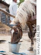 Лошадь на ферме. Стоковое фото, фотограф Dmytro Kohut / Фотобанк Лори