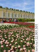 Купить «Тюльпановый рай в Александровском саду, Москва», фото № 22901501, снято 15 мая 2016 г. (c) Валерия Попова / Фотобанк Лори