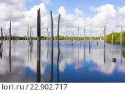 Мёртвый лес в озере. Стоковое фото, фотограф Александр Бекишев / Фотобанк Лори