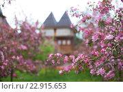 Цветущие розовые яблони. Стоковое фото, фотограф Светлана Сарапкина / Фотобанк Лори