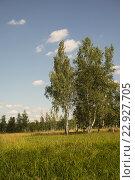 Деревя в поле летом. Стоковое фото, фотограф Александр Степанов / Фотобанк Лори