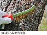 Купить «Чистка деревьев перед побелкой», эксклюзивное фото № 22940845, снято 4 мая 2016 г. (c) Юрий Морозов / Фотобанк Лори