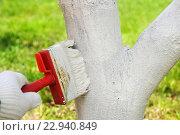 Купить «Побелка деревьев весной», эксклюзивное фото № 22940849, снято 4 мая 2016 г. (c) Юрий Морозов / Фотобанк Лори