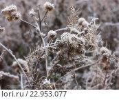 Первые морозы в ноябре. Стоковое фото, фотограф Павел Бурочкин / Фотобанк Лори