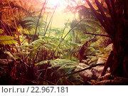 Купить «Jungle», фото № 22967181, снято 18 ноября 2019 г. (c) easy Fotostock / Фотобанк Лори
