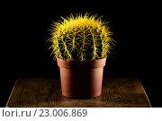 Купить «Желтый кактус в коричневом горшке», фото № 23006869, снято 5 декабря 2015 г. (c) Стивен Жингель / Фотобанк Лори