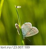 Купить «Маленькая бабочка сидит на траве. Вид сзади», эксклюзивное фото № 23007189, снято 25 мая 2016 г. (c) Игорь Низов / Фотобанк Лори